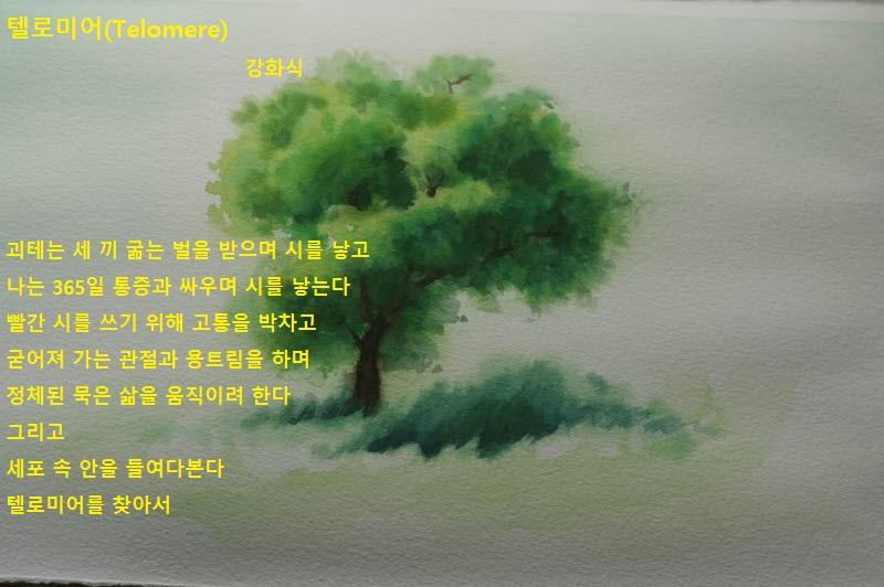 0412왕버들나무4.jpg