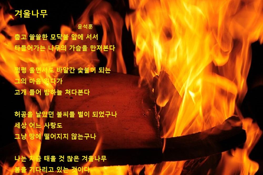 겨울나무-윤석훈.jpg