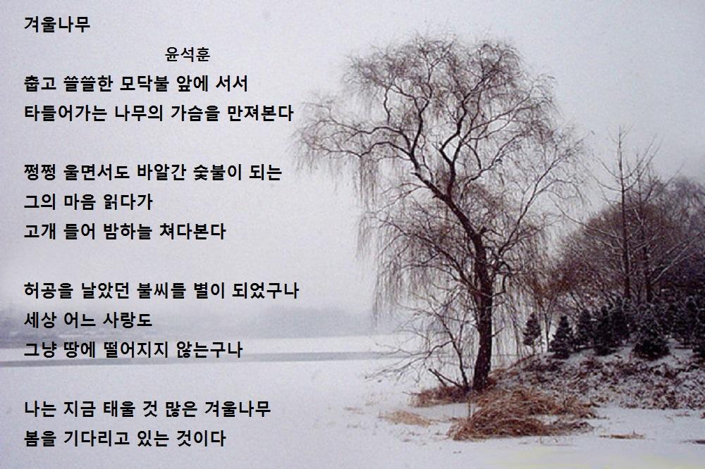 겨울나무2- 윤석훈.jpg