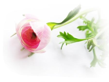 꽃-10.jpg