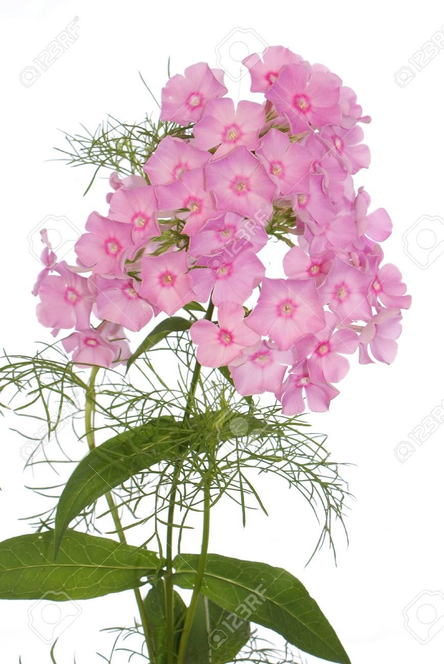 14772970-여름-꽃의-축하-꽃다발.jpg