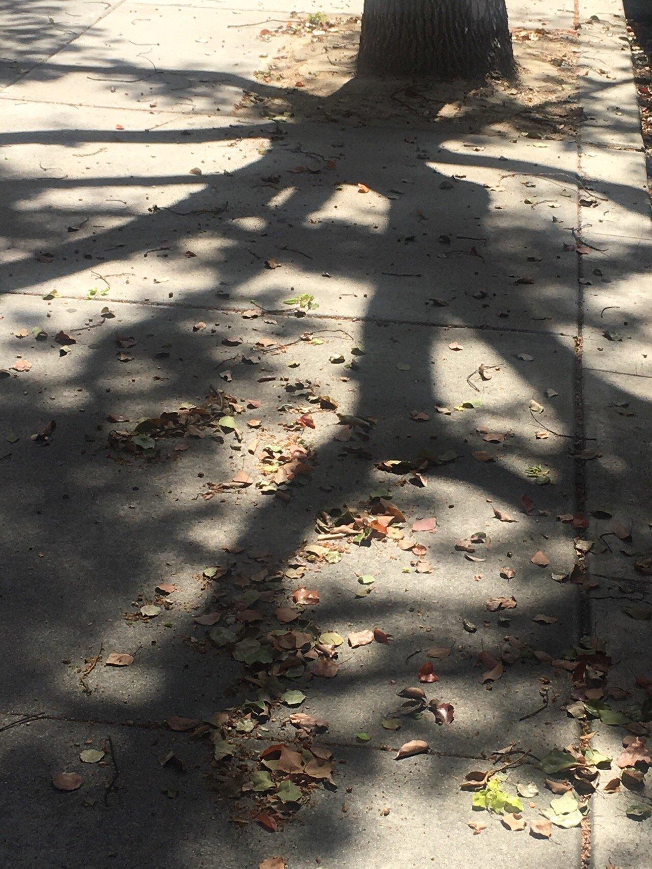 나무 그림자 1.jpg