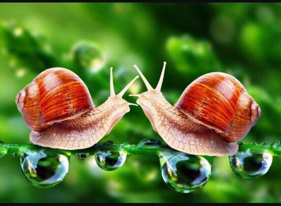 달팽이 사랑 2'.jpg