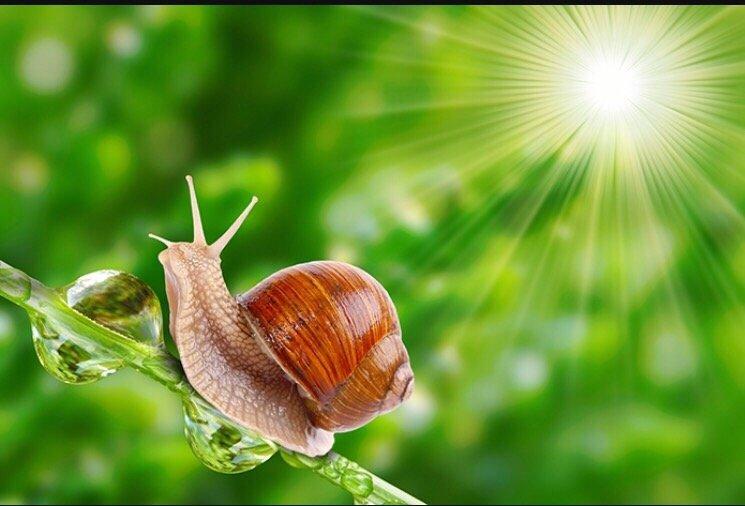달팽이 사랑1.jpg