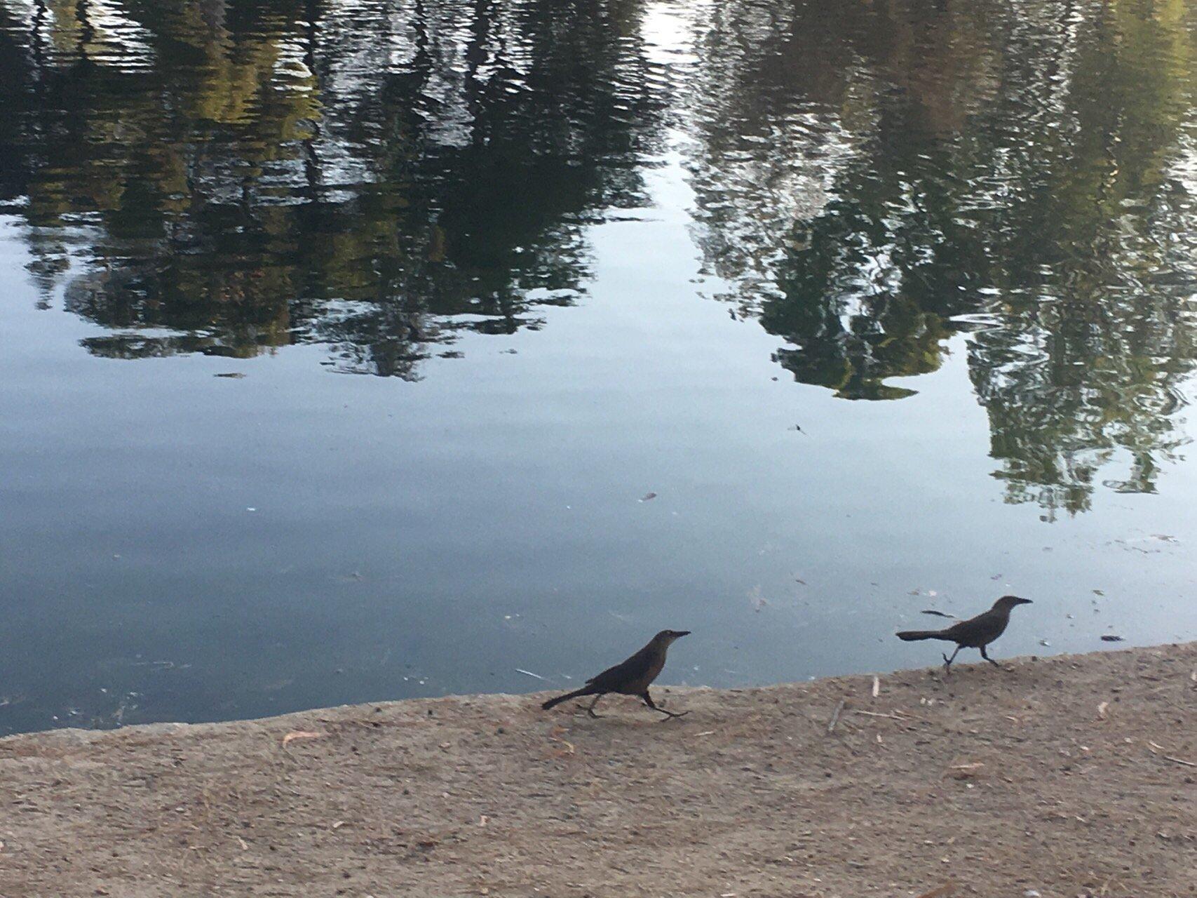 두 마리 새.jpg