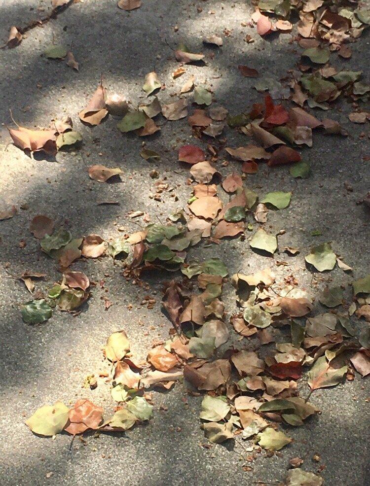 마른 잎 2.jpg