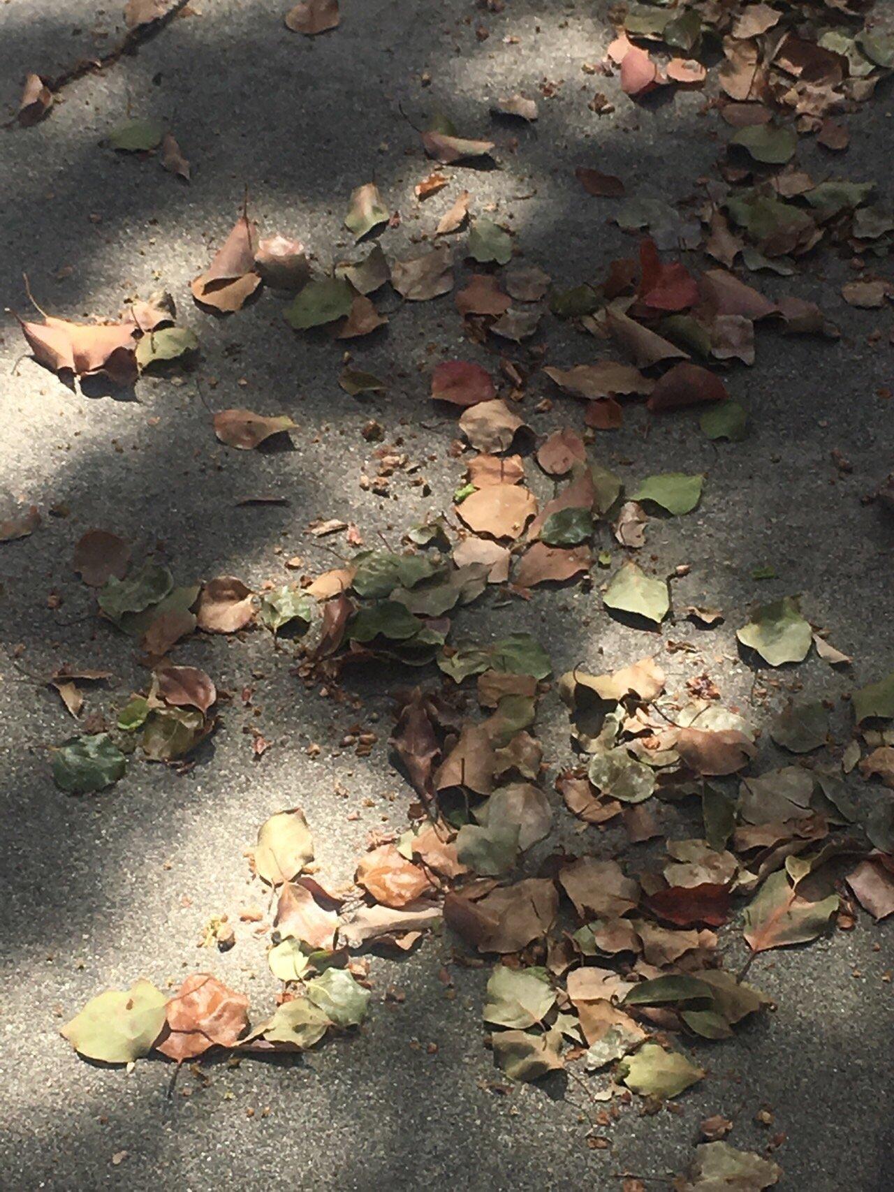 마른 잎.jpg