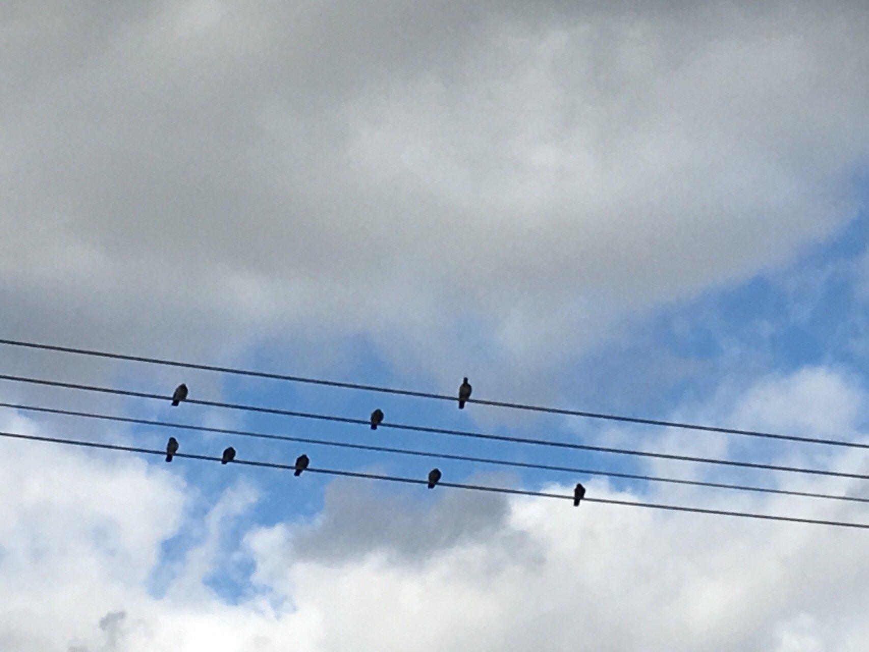 음표로 앉은 새 떼 1.jpg