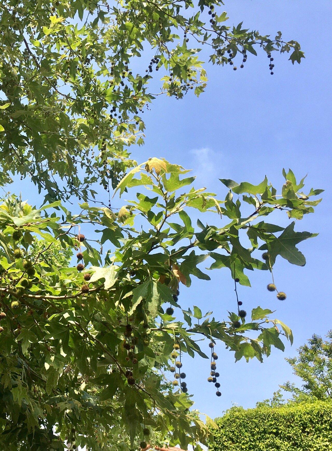 잎의 온기로 1.jpg