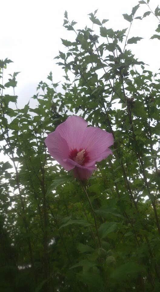 한 송이 꽃.jpg