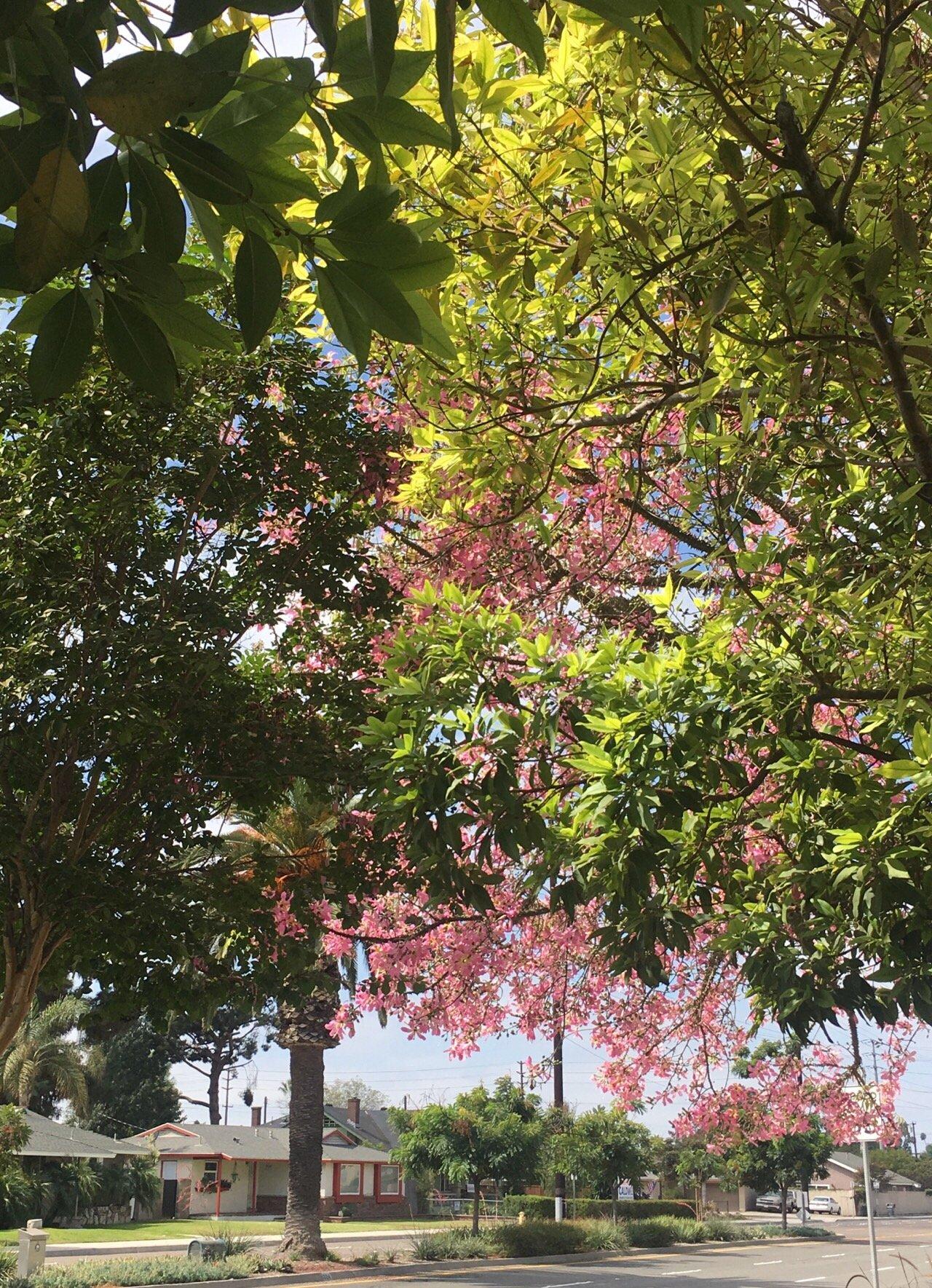 빛, 꽃, 잎.jpg