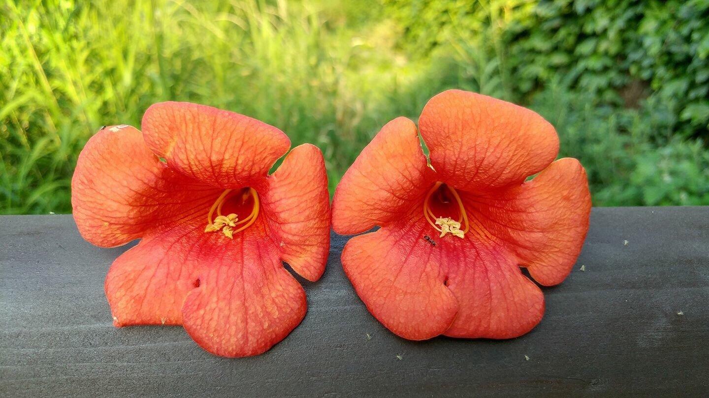 꽃들의 밀어.jpg
